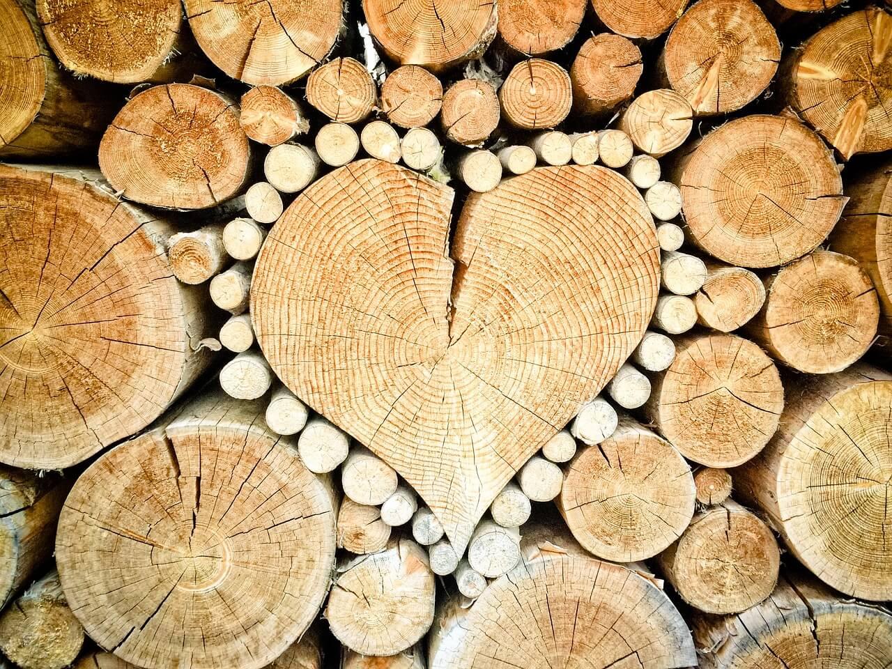 Was ist Holz? Holzlexikon
