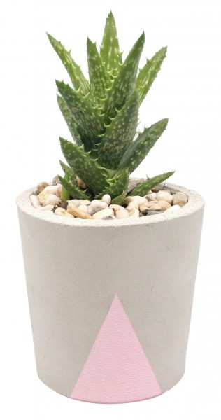 Betontopf grau mit altrosa Dreiecken inkl. Pflanze