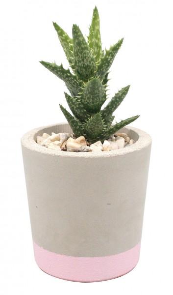 Betontopf grau mit altrosa Boden inkl. Pflanze