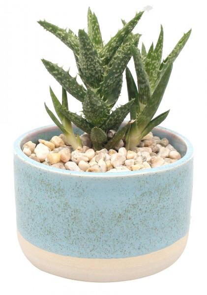 Keramiktopf - hellblau inkl. Pflanze