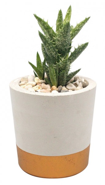 Betontopf grau mit kupfernem Boden inkl. Pflanze
